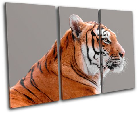Tiger Wildlife Animals - 13-1524(00B)-TR32-LO